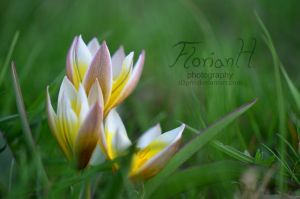 Beauty in the gras (Flower 3) by D3PRO