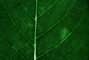 Leaf background by Desintegrator