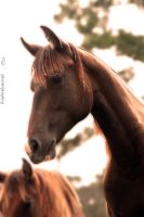 Tall and handsome by TlCphotography730