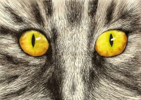 Cat eyes by smixova