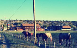 Grazing In Town by 8hollyberry