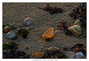 On the beach - 003 by laurentroy