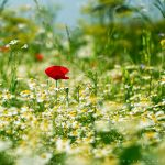 Mellow Meadow by Oer-Wout