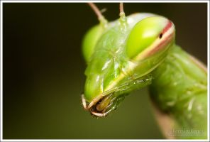 Praying Mantis 2 V by Deformity