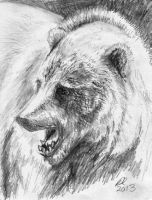 Grizzly by philippeL