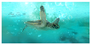 Green Sea Turtle by Tayalex