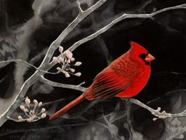Dark Spring (Northern Cardinal) by MistiqueStudio