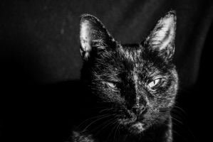 Dignified Portrait Cat by wetdryvac
