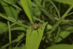 spider by rayna23