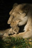 Asha and Cub 06-98 by lomoboy