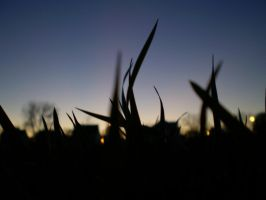 silhouette of grass by foodshelf