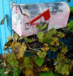 Mail box with Ivy by UntouchableDesign