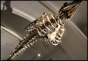 Animal museum 4. by MoiraHermione