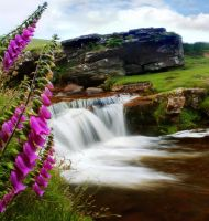Foxglove Waterfall by nectar666