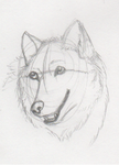 Wolf sketch by nitalla