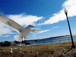 Seagul Swarm 3 by Dragon-Lord-77