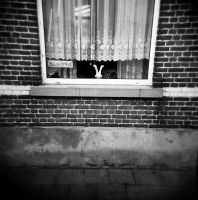 Holga V - Doel serie by Mar10Photography