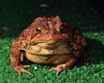 Toad Embittered After Being Netted by a Child by Laika-chan