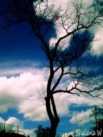 Tree and Clouds by ZombieChickxxx