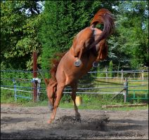 River - Stock 10 by Horses--Stock