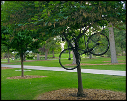 Bicycle Tree by MadejyalookGraphics