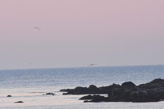 Color Emerging On the Beach, Terns In Flight 2 by Miss-Tbones