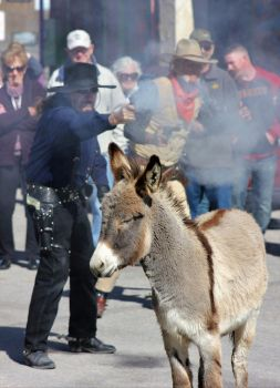 Burro could care less about gunfight by finhead4ever