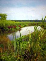 wetland river by Toadsmoothy2