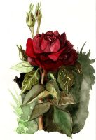 Landscape 12 - A rose by rej-