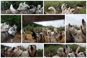 Huskies by Eulenfeuer