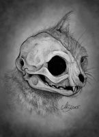 Cat's Skull by SarembaArt