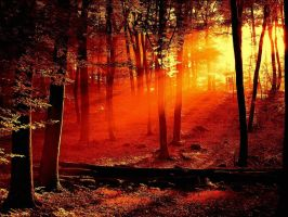 Red Forest Sunset by ShadowisaHawtie