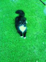 Berty In The Grass..x by megxerex2k7