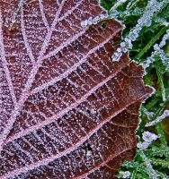 First Frost by FalseMaria