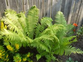 Fern by TimeCollector