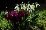 The Colour of Spring by EarthHart