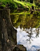 stump and river by Livath