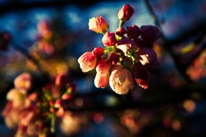 Blossoming by JtheQ