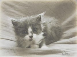a new day (Kitten #4) by ThePusch