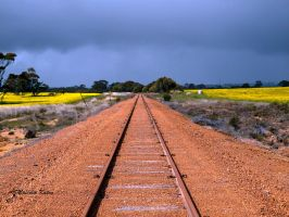 Canola All Stops by FireflyPhotosAust