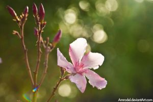 Blossom After Rain by amrodel