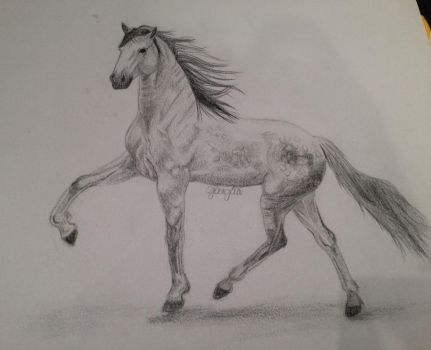Horse by Bruzzy