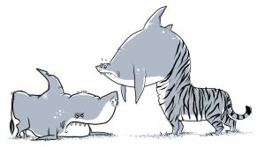 bull shark VS tiger shark by chunkysmurf