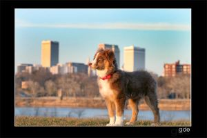 city dog by gde