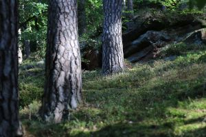 Palatinate Forest Stock 55 by Malleni-Stock