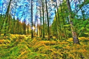 Woodland HDR by libra-dreamer