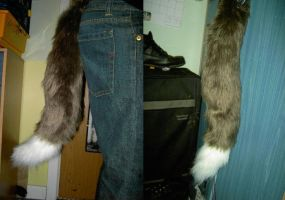Border Collie tail by Kitsune--Rin