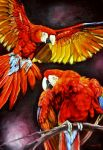 Scarlet Macaws by veracauwenberghs