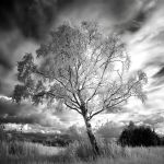 Birch infrared by MichiLauke