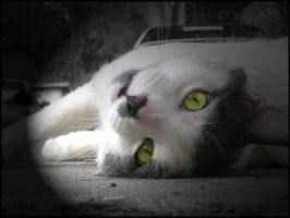 Street Cat 2 by cooler81